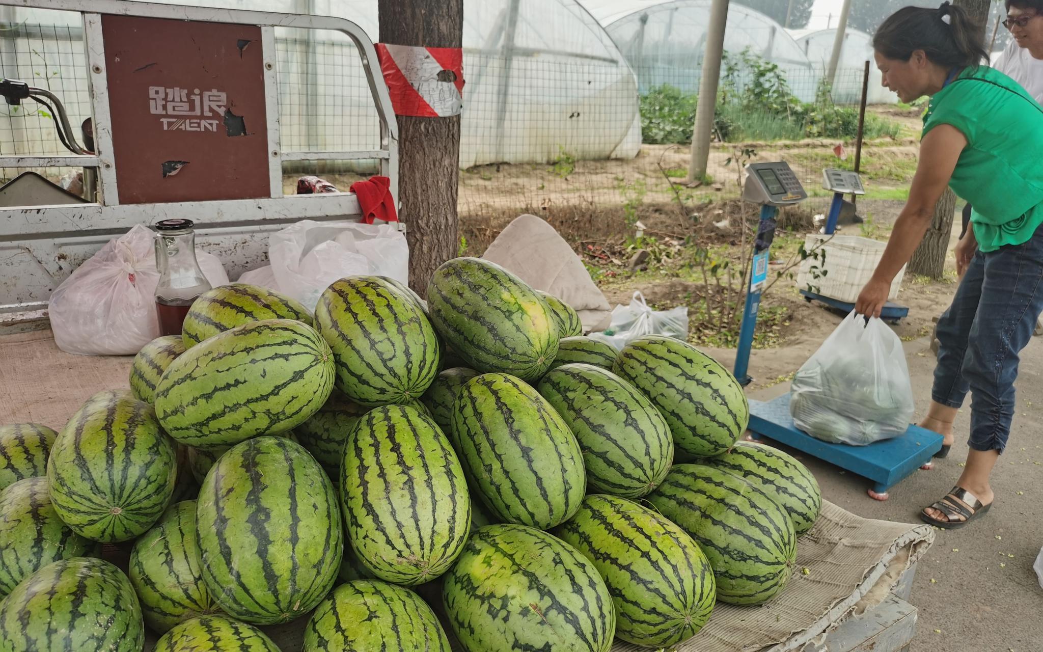 瓜农在路侧向过往车辆售卖西瓜。新京报记者 王颖 摄