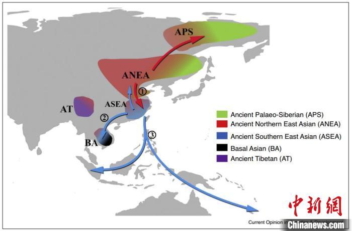欧亚大陆全新世与遗传证据相关的主要人群迁徙情况。付巧妹研究组 供图