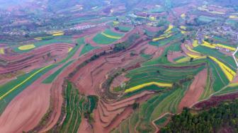最高法:严格保护农民的土地承包权和流转土地经营权