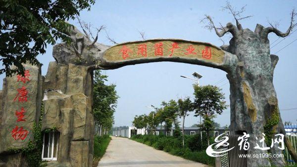 """泗洪渭南村:""""村""""和""""人""""是相互联系的"""