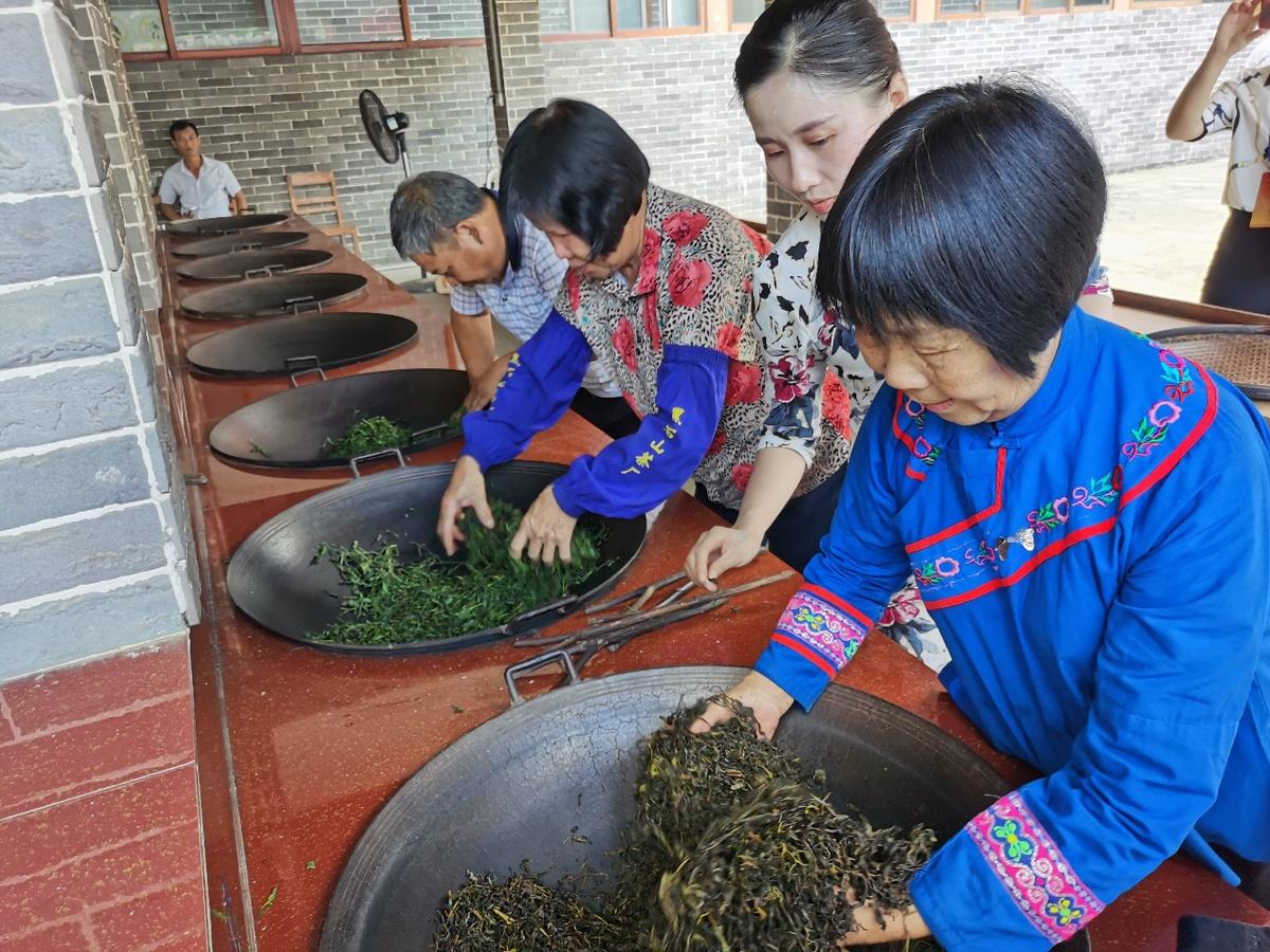 """【走向我们的小康生活】 梧州六堡镇:""""80后女老板""""传承传统制茶技艺"""