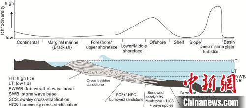 中外科学家对二叠纪-三叠纪之交遗迹化石研究取得进展