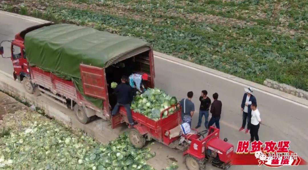 脱贫攻坚走基层贵阳市农投集团威宁蔬菜基地喜获丰收