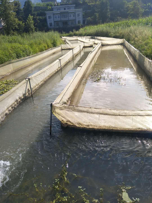 疏通水塘,再建牛舍 洪水过后恩施建始县清淤自救