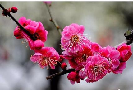 姜方 |  梅兰竹菊
