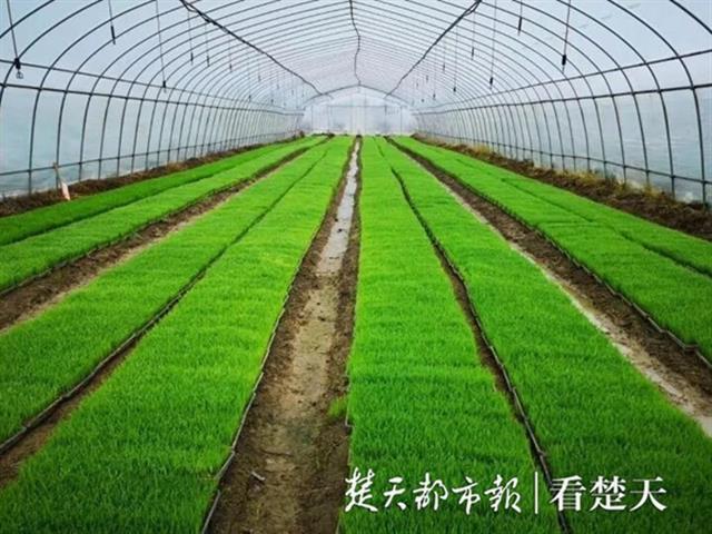 """武汉市三家单位被授予""""全国巾帼脱贫示范基地"""""""