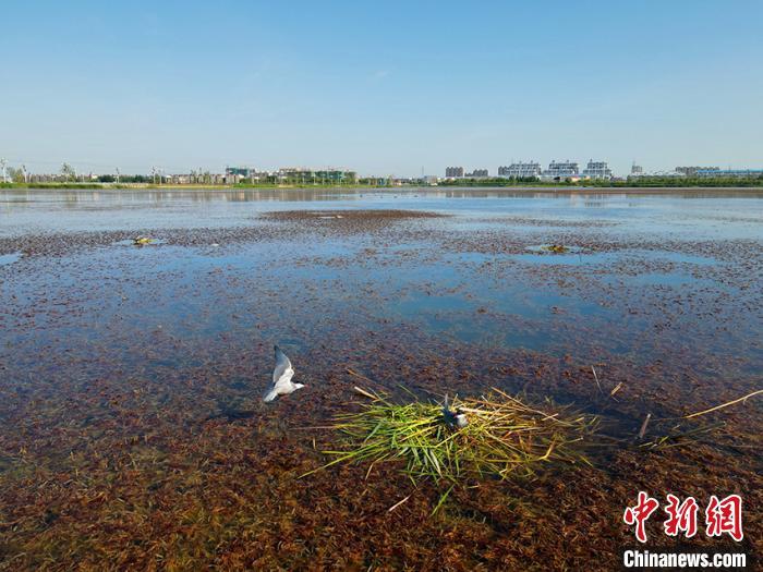 """吉林镇赉环城国家湿地公园成""""鸟的天堂"""""""