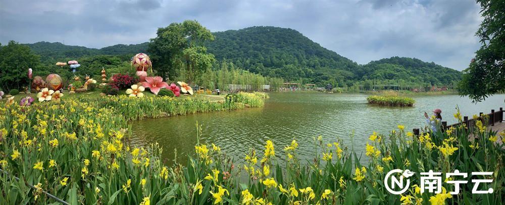 青秀山风景区举办2020年青秀山水生花卉展,为广大市民游客提供一个游园赏花的好去处。记者 潘浩 摄