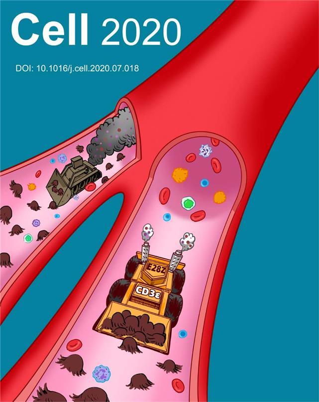 科学家发展CAR-T细胞治疗新方法