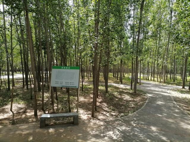 「三创四建」曲周:全力推进造林绿化工作 加快森林城建设步伐