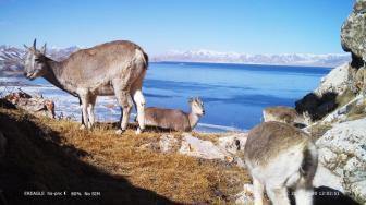 打击非法野生动物交易 中国停业整顿市场及经营户1.2万余家