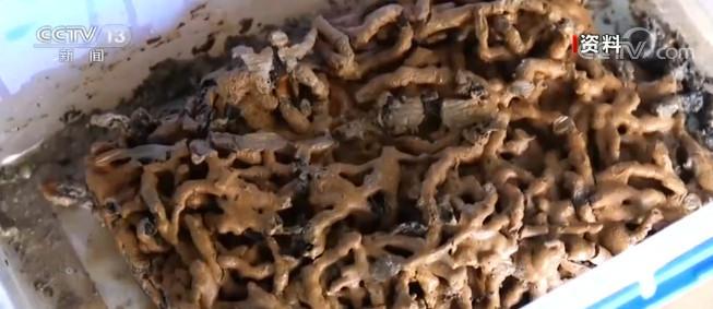 江西:海昏侯墓中发现中药炮制品实物