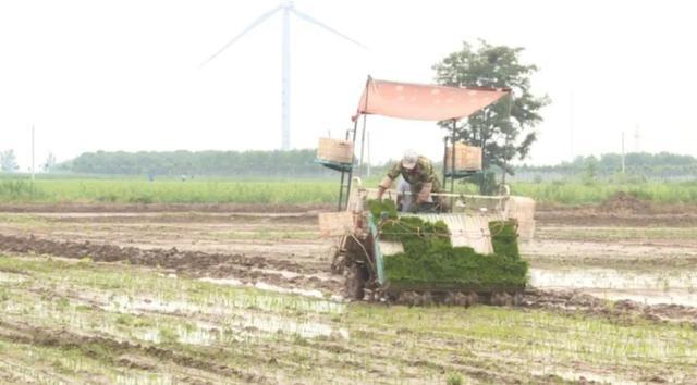 土地综合治理丨打造德州庆云首个水稻种植试验田