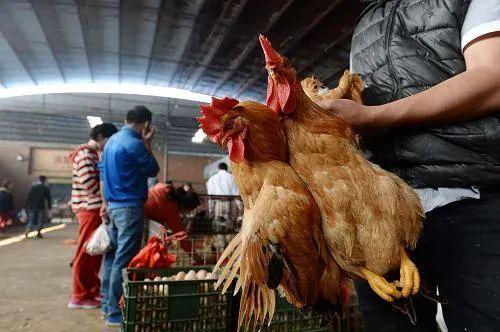 3日广东新增确诊和无症状感染者各1例,均为境外输入!全国将逐步取消活禽市场交易