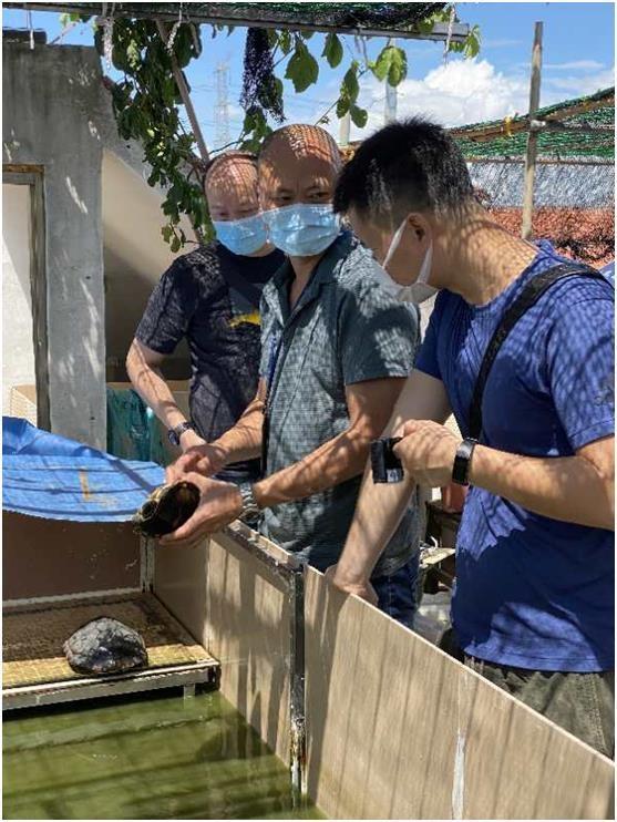 南沙警方查获287只国家二级保护动物黄喉拟水龟