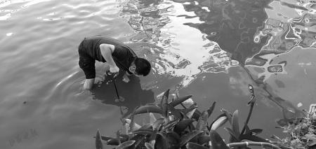 百事2平台:此时百事2平台此刻水中的身影最美图片