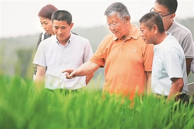 农业专家赵亚夫在镇江句容田头送技术