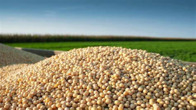 巴西对华大豆出口创新高,或超越美国成世界第一大豆生产国图片