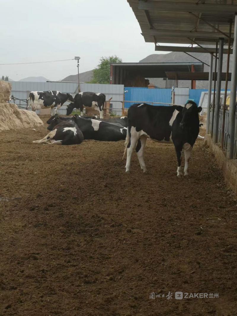"""创建国家食品安全示范城市丨兰州加强生鲜乳和散装牛奶监管:售卖""""铃铛奶""""须提供相关合格证明"""