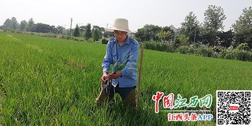 南昌县农业农村局切实加强植保技术服务工作