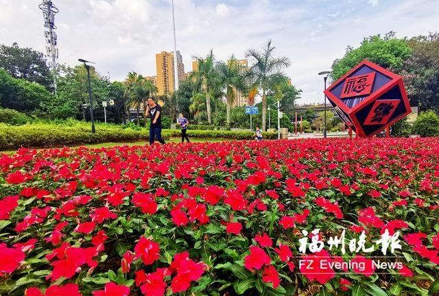闽江公园长春花盛开 系首次从国外引进的新品种