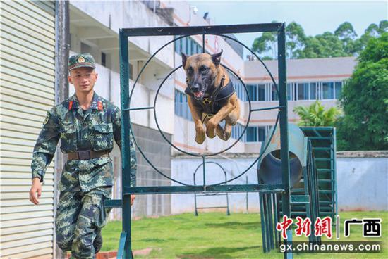 探访武警广西总队警犬班:具有军人般战斗精神的战友