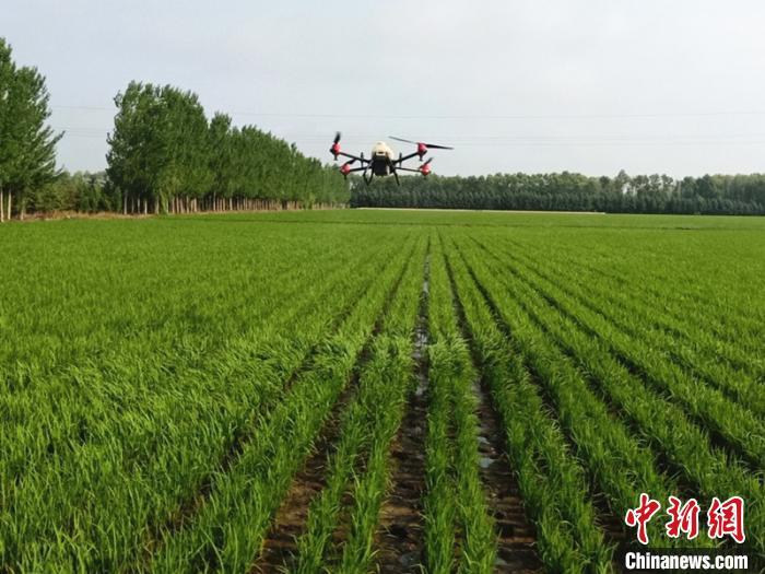 黑龙江苗情好受灾少 今年预计粮食产量将超1550亿斤