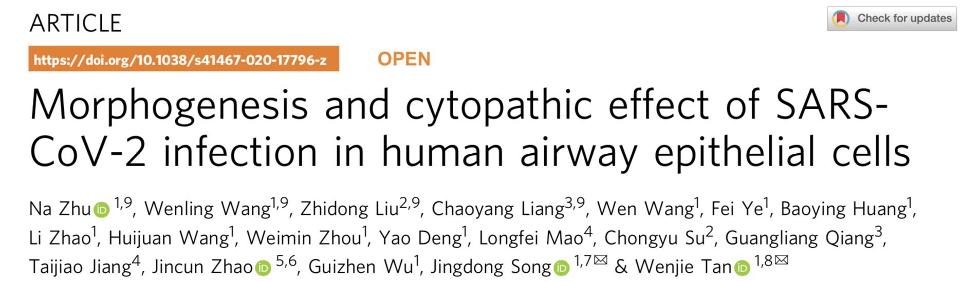 中疾控等研究登自然子刊:新冠能感染更多呼吸道上皮细胞类型
