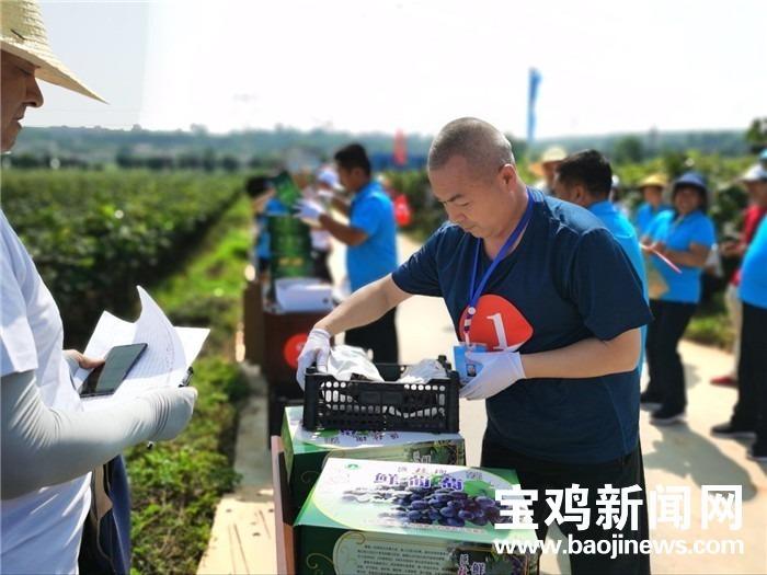 宝鸡乡村振兴农民趣味运动会打响 谁摘葡萄快又多?