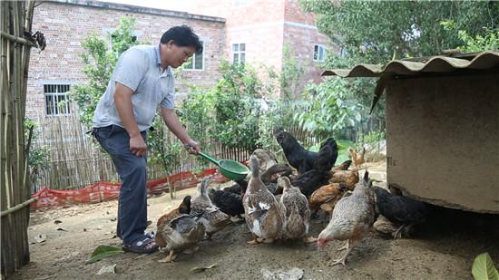 谭俊新正在喂养家里的鸡鸭。广西新闻网记者林亮摄