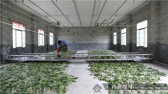 养蚕工作室。广西新闻网记者林亮摄