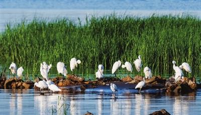 水清景美 鸟儿云集