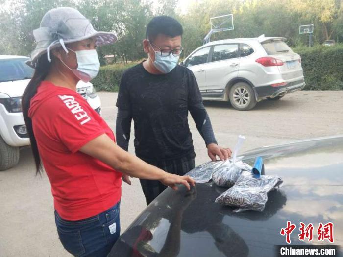 """新疆兵团:农产品销售专班当""""红娘""""为10万亩食葵打开销路"""