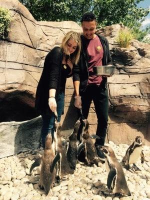 """在动物园里""""顺手牵羊""""奇葩游客,是天真还是愚蠢?"""