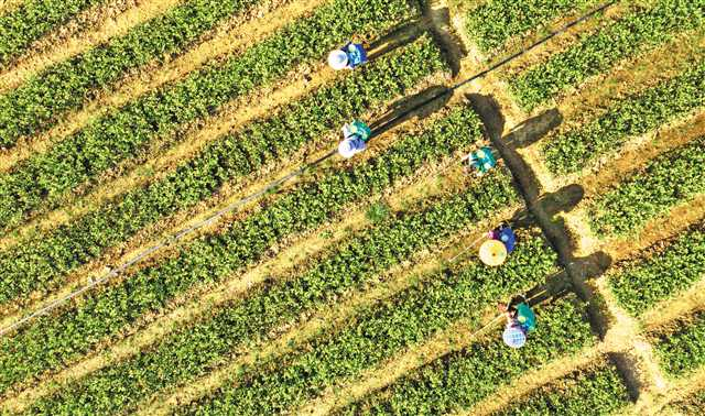 酉阳:种植油茶促进产业发展
