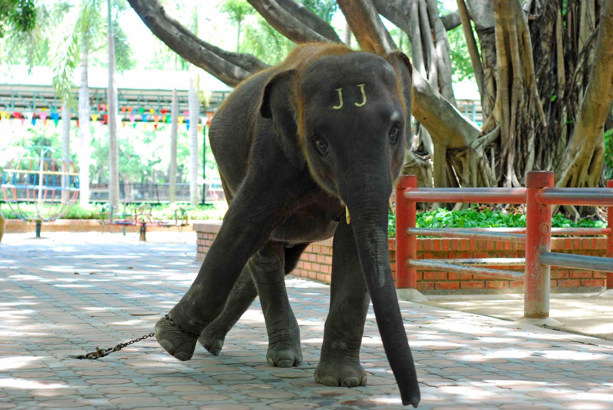世界大象日:关爱大象生存,从詹姆士·卡梅伦的短片中找勇气