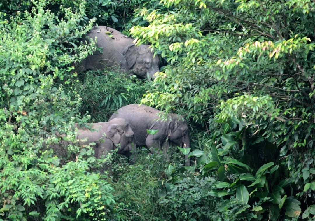 云南,与亚洲象同行