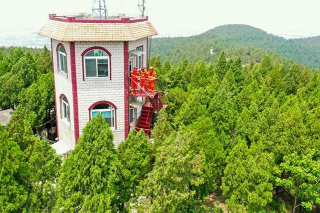淄博市淄川区自然资源局:扎实开展夏季林业工作 新栽树木2.53万株