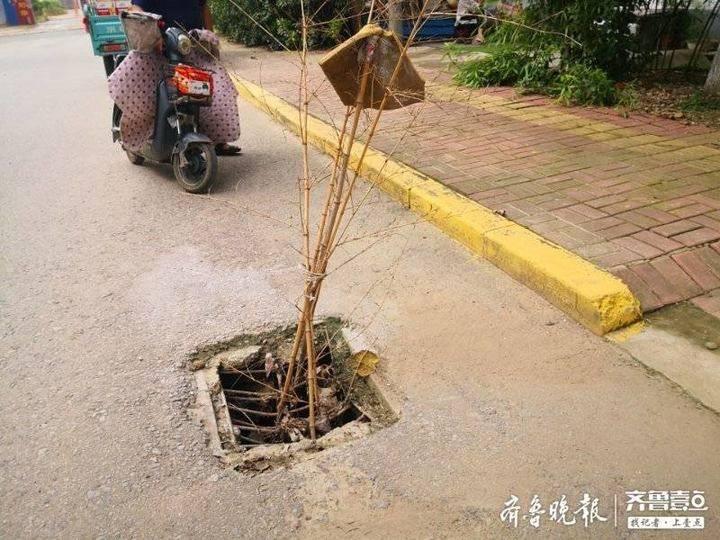 """枣庄这巷子百米路,多个井盖""""张口""""变陷阱,树枝充当""""信号树"""""""