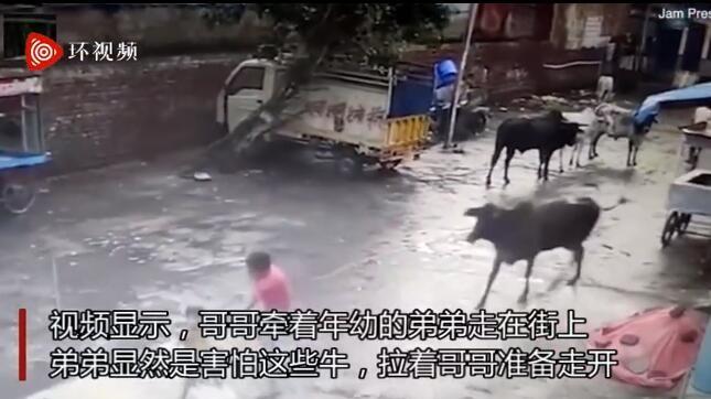 印度一头公牛突然袭击两男孩 路人扔砖头将其赶走