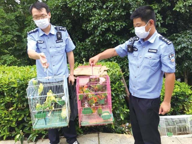 咸宁市森林公安局对老二桥花鸟市场进行突击检查