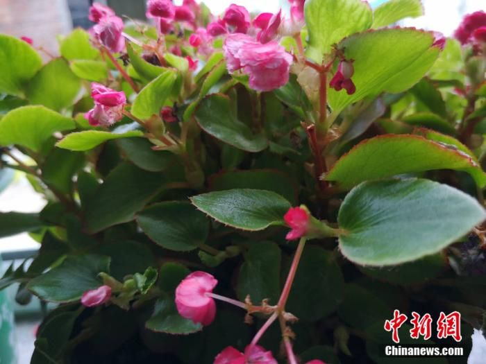 【幸福花开新边疆】在小康路上的逆风翻盘:稻花村,花开正好