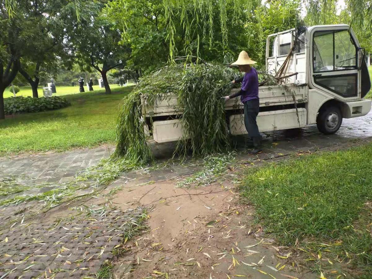 暴雨后,北京国际雕塑公园清扫树枝等杂物六车