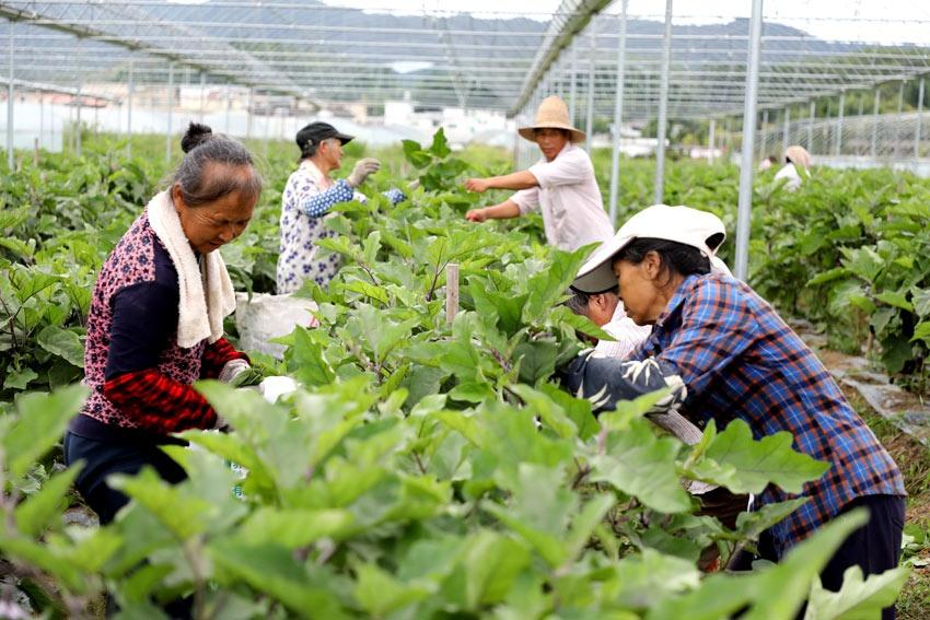 江西全南:产业扶贫带农致富