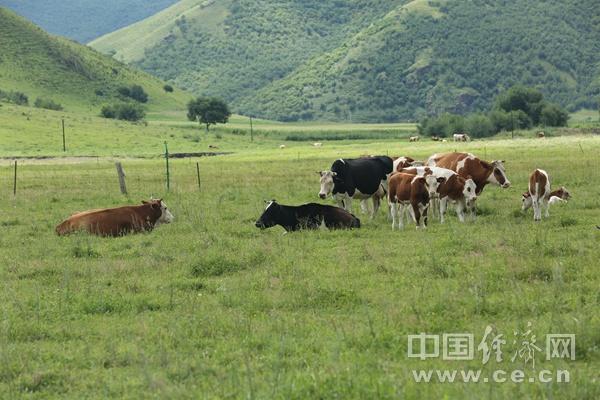 合作社里的致富人 绘就草原最美底色