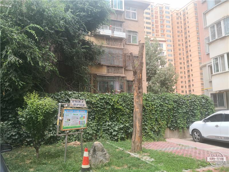 帮着办丨百合园小区多棵绿化树树头被砍,物业:业主反映遮挡采光, 业委会根据业主意见作出的决定