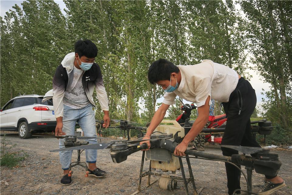 新疆呼图壁:无人机飞防作业保棉田丰收