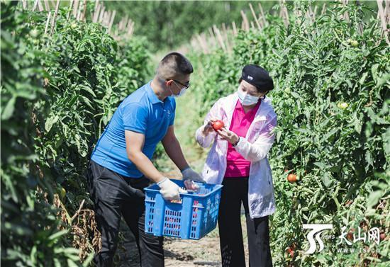 """新疆多举措打通农产品销售""""最后一公里"""""""