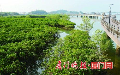 """厦门红树林总面积约达200万平方米 为厦门湾筑起""""绿色长城"""""""