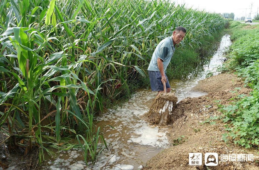 枣庄:农民排涝保苗